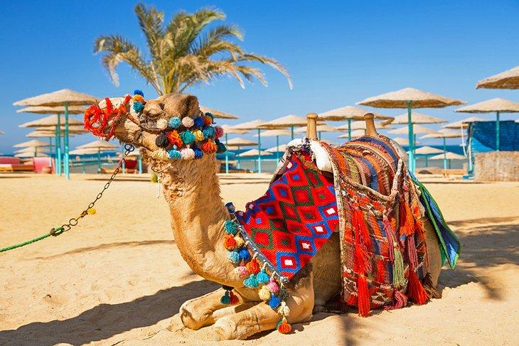 Snorkeltur til Sharm El Naga