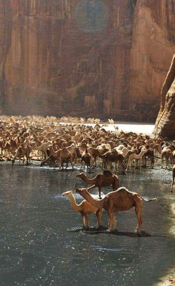 Valley of the Camels