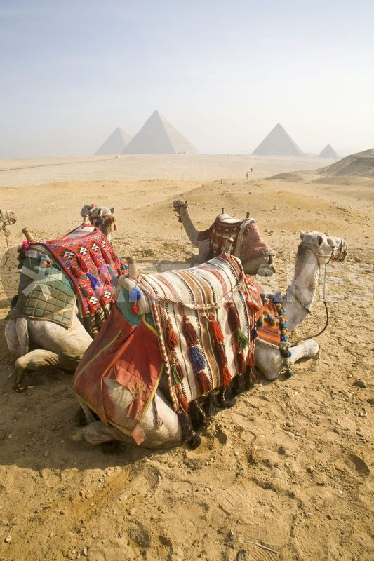 Two Day Trip to Cairo & Luxor by Flight and bus
