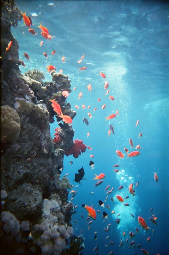 Viaje de Playa y Snorkel hasta la Bahía Shark