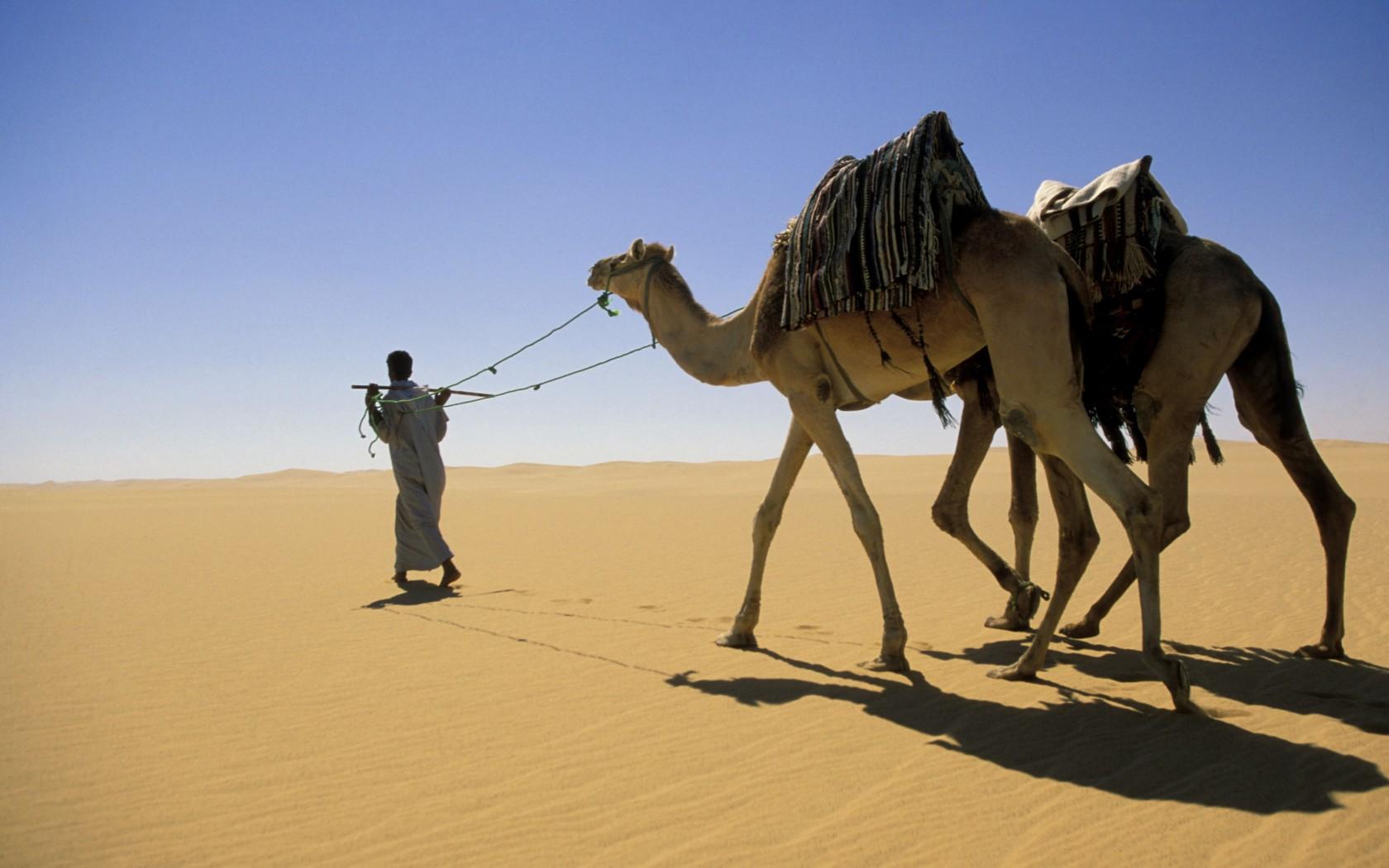 Safari en Camello