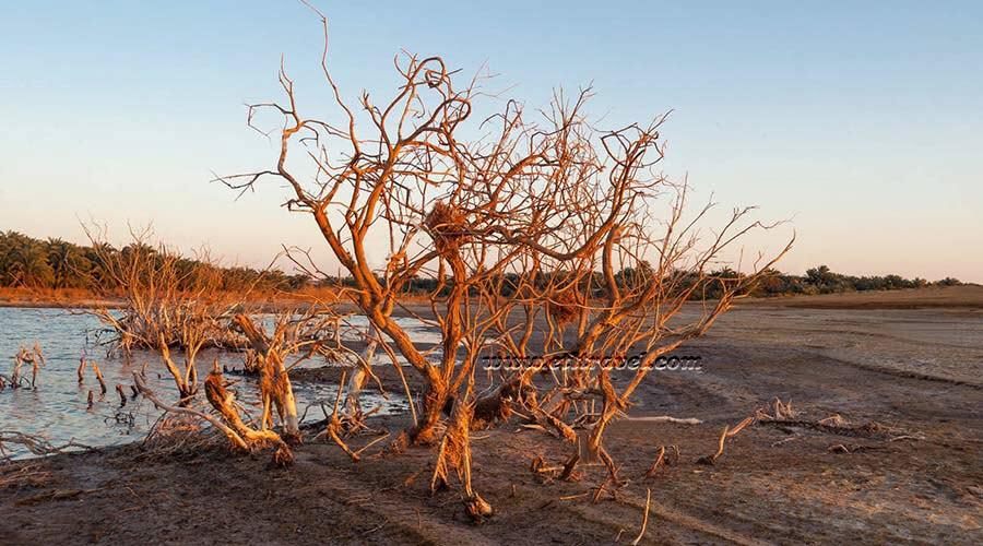 11 დღიანი ტური უდაბნოს ოაზისები და კრუიზი ნილოსზე