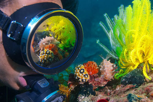 AWARE Coral Reef Conservation Specialty Course