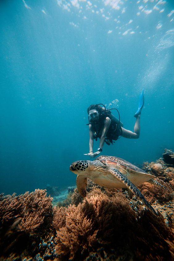 Diving in Samadai Reef