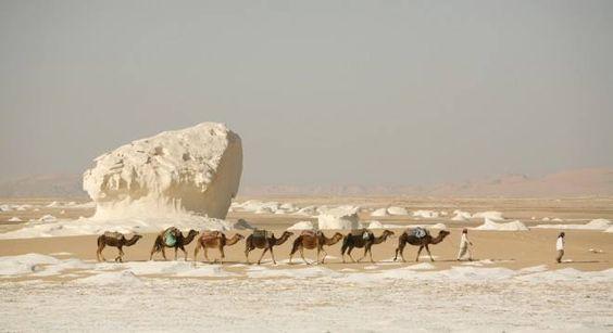 11 giorni attraverso il Deserto Occidentale con trekking tour nel Deserto Bianco